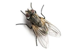 likwidowanie much